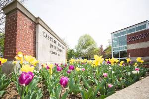 Yellow and purple tulips before the EKU sign