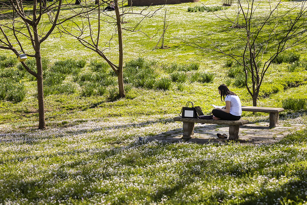 Student sitting on bench in Ravine studying surrounded by green grass and white blooms on plants.